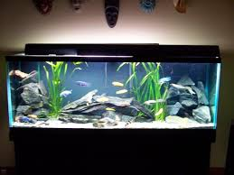 home cichlid fishtank | cichlid tank tank description i have 125 freshwater  african cichlid ... | lifestyles | Pinterest | Africans, Aquariums and Fish  ...