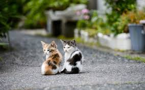 Image result for kittens