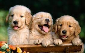 Cute Dog Desktop Wallpapers - Top Free ...