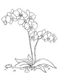 Small Picture Printable orchid coloring page Free PDF download at http