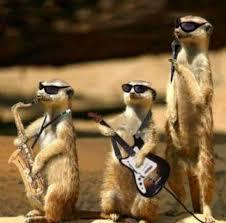 Resultado de imagen de suricata