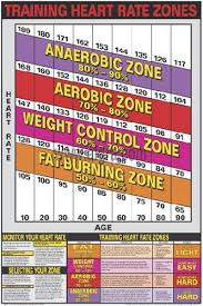 Cardio Training Zone Chart Training Heart Rate Zones Professional Fitness Wall Chart