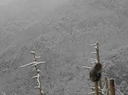さるだんご 嵐山モンキーパークの日常 2010年12月