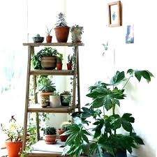 inside plant stand extremely house