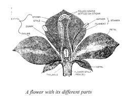 selina concise biology cl 6 icse