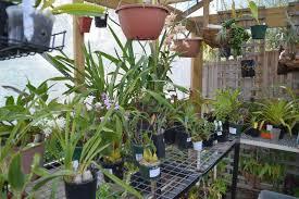 orchids 003