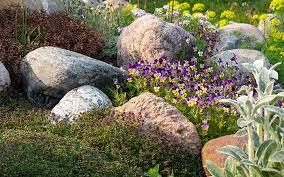 top plants for an alpine rock garden