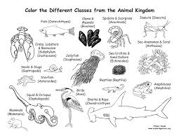 Small Picture Animals From Every Class of the Animal Kingdom Coloring Page