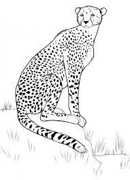 Disegno Di Una Tigre Az Colorare