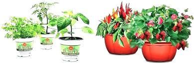 home depot plant pots succulent plants home depot plant pots indoor white pot for home home depot plant pots
