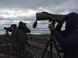 Steve Kolbe, Alex Lamoreaux, Karl... - Hawk Ridge Bird Observatory |  Facebook