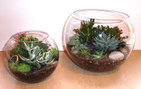 small plant for office desk. 10 best indoor inspirations images on pinterest gardening plants and office small plant for desk i