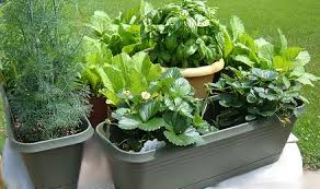 Small Picture Herbs in a Container Garden GARDEN IDEAS AND DESIGN BLOG