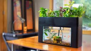 aquarium office. AquaSprouts Garden: The Perfect Low-Maintenance Aquarium \u0026 Aquaponics Kit For Your Home Or Office H