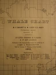 Whale Chart Species Artifact Adventures Whale Chart 1851