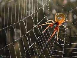 نتیجه تصویری برای عکس عنکبوت