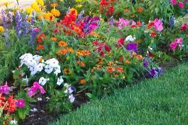 perennial flower garden wallpaper