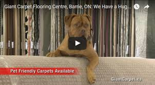 looking for area rugs carpets other flooring types visit us today giant carpet flooring centre