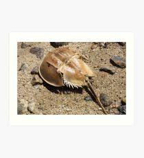 shell of a life art print 20 00 horseshoe crab photographic print on horseshoe crab wall art with horseshoe crab wall art redbubble