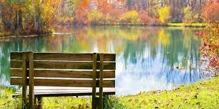 Image result for image of bench in park