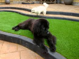 artificial grass for pets. Pets-and-artificial-grass Artificial Grass For Pets