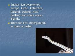 Image result for snakes in new zealand