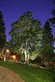 landscape lighting ideas outdoor tree