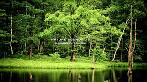 Nature Sound 16 The Most Relaxing Sounds Youtube