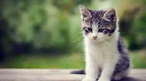 Cute Kittens Wallpapers [1920x1200 ...
