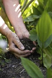 soil for growing vegetables soil