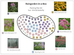 Small Picture Fall Winter Interest Rain Garden Plan A Full Sun Design Landscape