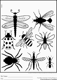 Arterey.info Within Free Printable Insect Coloring Pages ...
