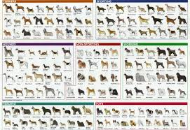 All Dog Breeds Chart All Dog Dog Breeds Chart Dog Breeds List Dog Breeds Pictures