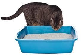 cat sniffing litterbox cat litter box