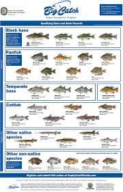 Maintenance Tank Florida Freshwater 2017 Fish Of
