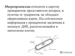 Презентация на тему Лекция Тема Классификация и морфология  8 Микроорганизмы относятся