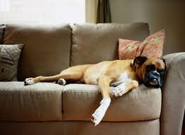 you can let sleeping dogs lie as long as you ve chosen your furniture wisely