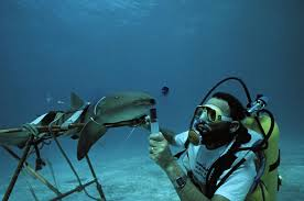 learn about being a marine biologist marine biologist uses dye to test respiratory flow of nurse shark