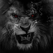Zendha: Black Lion Wallpaper