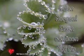 Pin Von Maria Auf Sprüche Heilpflanzen Guten Morgen Schatz Und