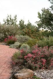 1000 ideas about australian garden on pinterest roses native gardens and australian native garden big garden office ian