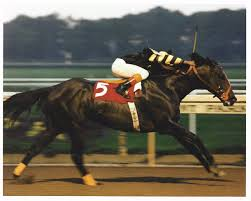 slew of people. seattle slew winning the 1978 marlboro cup of people