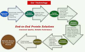 Protein Purification Chart Protein Services