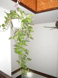 Decoration: Cool Enclosed Plant Life - Plants