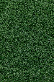 Best 500+ Grass Pictures