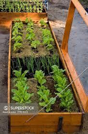 raised vegetable garden beds lasagne