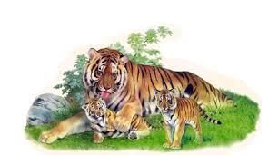 Красная книга Амурский тигр