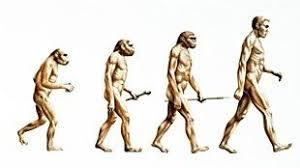 charles darwin biography darwinius masillae discovery and human evolution