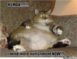 Funny-Fat-Cat-Memes-5.jpg via Relatably.com