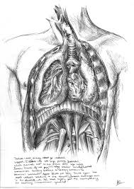 Sketch Of The Respiratory System Of Human Respiratory System ...